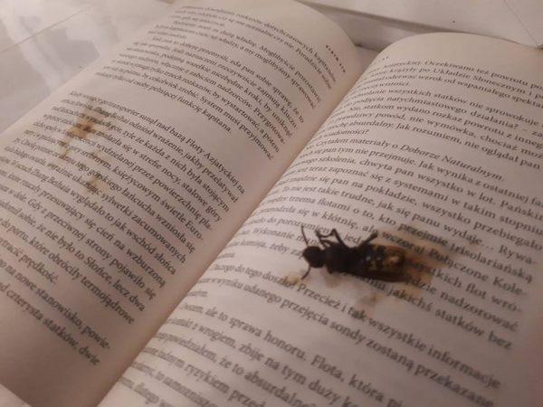 Blog - 22 sierpnia - Epicka śmierć